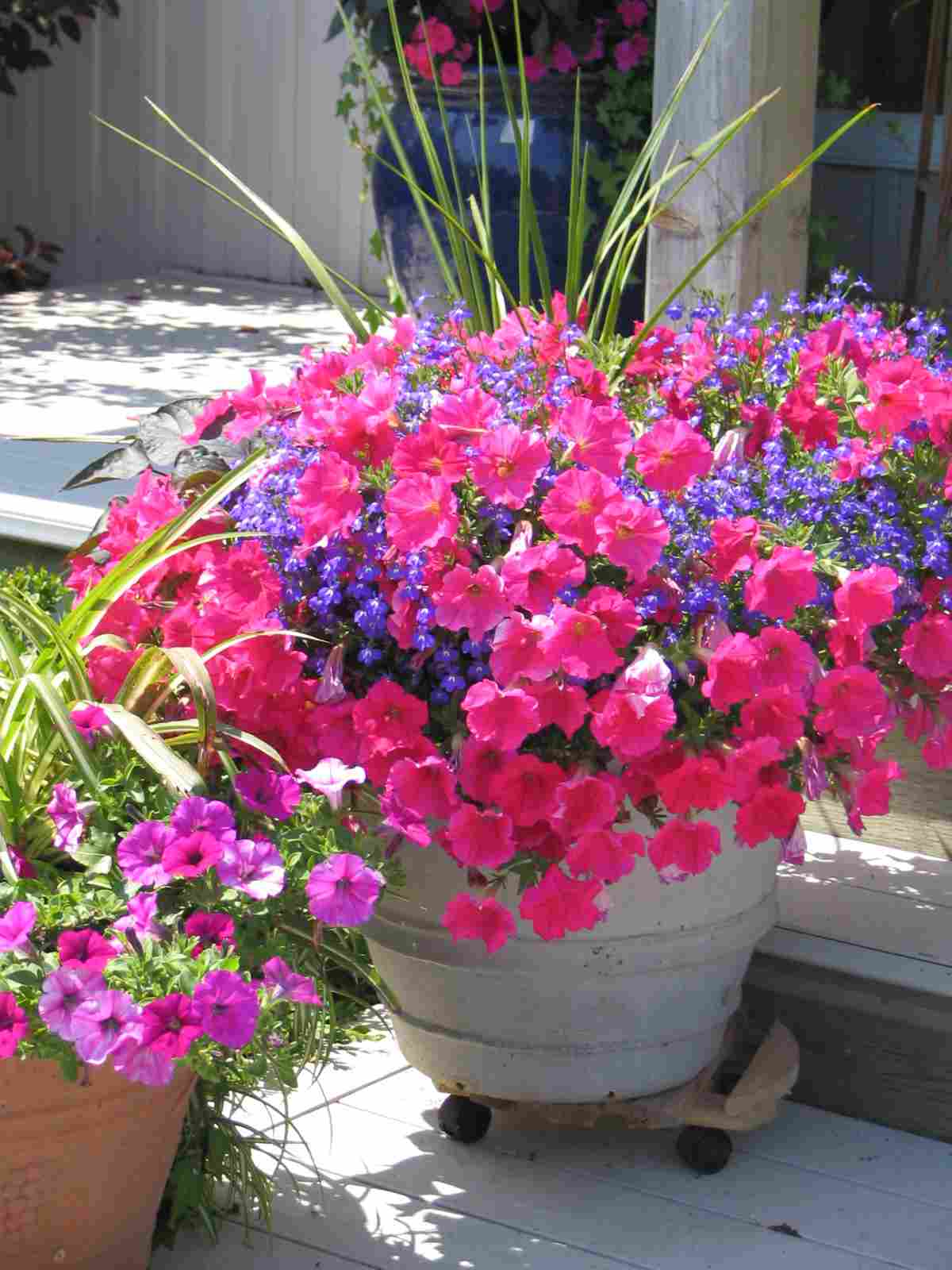 Container gardening colonial nursery - Container gardens for sun ...